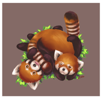 HBD : Red Panda by ridekasama