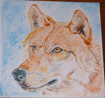 Watercolor Wolf Portrait by Mintakawolven