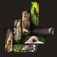 Zoo - Wall Display by danlev