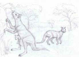 hook-fingered kangaroo scetch by AlexSone