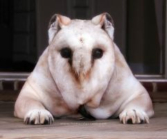 Dowl by HumanDescent