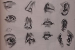 Study - Parts of the Face by ArtistMeli