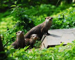 Otter Family by Shadow-and-Flame-86