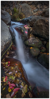 Autumn Brook by DMMDesign