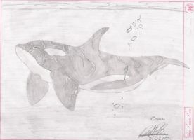 Orca by rutis14