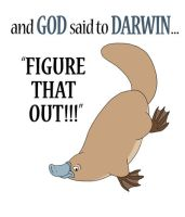 And GOD said to DARWIN... by tuftedpuffin
