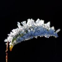 crystals on a leaf by augenweide