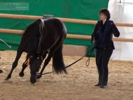 Black Andalusian_1 by CalyHoney