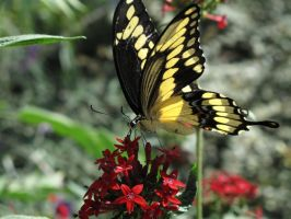 Swallowtail Stance by X5-442
