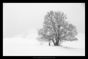 alone in the storm by AMARoso