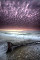The lonely Whale by pixelmount