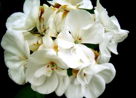 Bunches Of White by rlgarrard