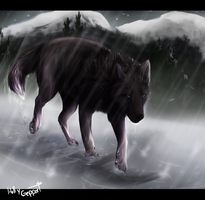 Lone Wolf by XBlackIce