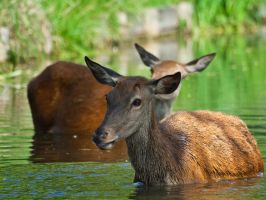 Red Deer 00 - Jul 13 by mszafran