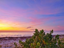 Sea lettuce sunrise by peterpateman