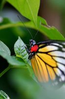 Butterfly Photo 21 by blookz