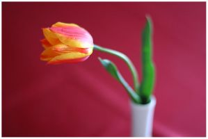 just a tulip by bibamus-pd