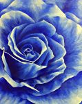 Blue Rose of Mystery by blue1836