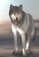 Timber Wolf by MerriTheDoodler