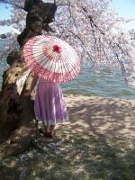 Cherry Blossoms 14 by Sitara-LeotaStock