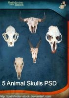 5 Animal Skulls PSD Pack by Pathfinder-Stock