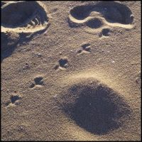 Footprints in the Sand: II by dispirited
