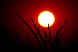 Red Sun by cathy001