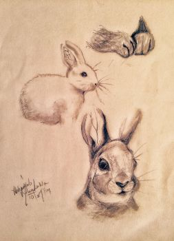Rabbit ~ Graphite by abbeygoescrayons