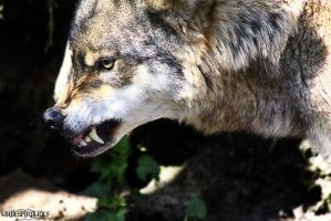 .:Leave Me ALONE:. by WhiteSpiritWolf