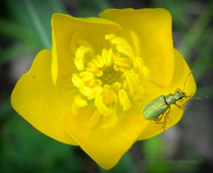 TGB: the Tiny Golden Bug by Cloudwhisperer67