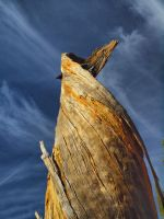 Spiral Tree- Lake Tahoe by MartinGollery