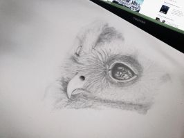 OWL by Rizqi09