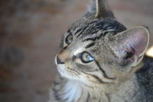 Soulful Eyes by AlainaLee