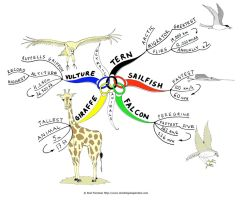 Olympic animals Mind Map by Creativeinspiration