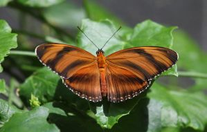 YAB (Yet another butterfly) by mkuegler