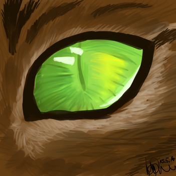 Cats Eye by Ma-chan17