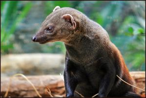 Mongoose by mydigitalmind