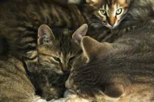 the striped family III by Kittengrapher