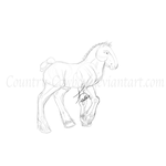 Practice Draft Horse Sketch by Country-Cowboy
