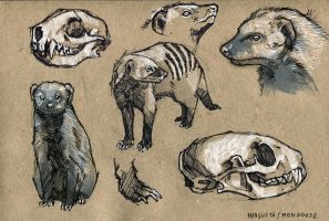 Mongoose - 100animals100days by wolf-minori
