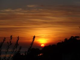 Sunset with Olive Leaves by Bahar1