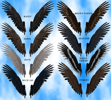 Feathered Wings 2A Stock Pack by Aazari-Resources