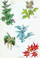 Herb and Foliage designs 1 by koshii