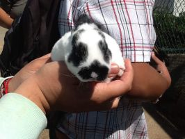 Another baby bunny by foxy21a72