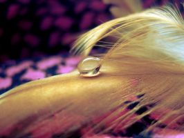 Another droplet by Pamba