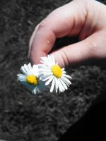 Holding daisies by PhotographicJaydiee
