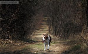 Dog on dark path by Drocco