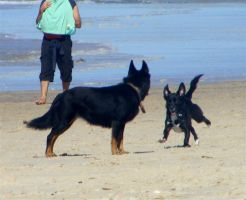 Beach dogs by faraf-stock-xx