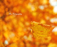 Falling for Fall by PhotographsByBri