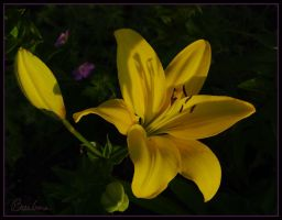 Yellow by barcon53